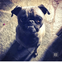 """Memes, Ups, and Waiting...: カ  A  NAde """"When you wake up to pee tonight, I will be waiting"""" -Ozzy"""