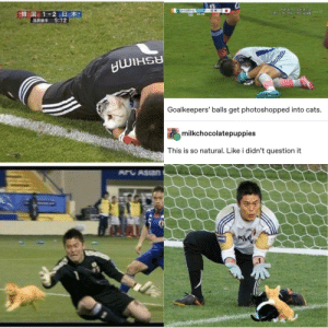 Don't mess with goalkeepers' balls.: ワールトドカップ  -3-0-1  645:25  FIFA 7-JUDE  E韓国 1-2日本  5:12  1U- 1 C LIVE  Goalkeepers' balls get photoshopped into cats.  milkchocolatepuppies  This is so natural. Like i didn't question it  ARCASIAN  PREAM Don't mess with goalkeepers' balls.