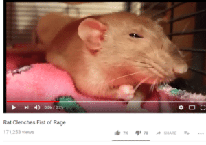 moon water: 丨  4)  0:06 / 0:25  Rat Clenches Fist of Rage  71,253 views moon water