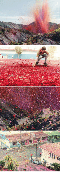 Memes, Volcano, and 🤖: 区風  目  a Millions of flower petals erupted from a volcano and covered an entire village