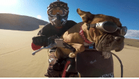 Mad Max: Furry Road. Happy National Dog Day → http://goo.gl/rOUoUm: 厠.  A Mad Max: Furry Road. Happy National Dog Day → http://goo.gl/rOUoUm