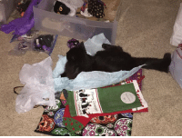 I'm supervising the packaging of Black Cat Ball Auction items! Mew.: 溲,  ev  Mark Grid  Mark  «O I'm supervising the packaging of Black Cat Ball Auction items! Mew.