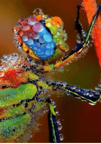 Dew drops on a dragonfly.: 玉  3. Dew drops on a dragonfly.