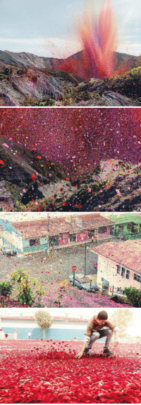 Memes, Costa Rica, and Volcano: 目  NE Millions of flower petals erupt from a volcano, covering an entire village in Costa Rica