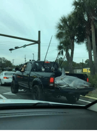 Meanwhile in sunny Florida: 笔 Meanwhile in sunny Florida