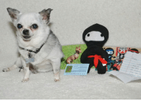 """I received a super nice package from Pee-Wee's Playground with this great Ninja doll and a lovely note in honor of Gwinnie.  Pee-Wee is a cool Chihuahua that was born without front legs and his motto is """"Never let adversity get in the way of your own happiness.""""  Thanks Pee-Wee and Little Freddie, I love you too!  Please go over and say 'Hi' to Pee-Wee at www.facebook.com/PeeWeesPlayground and let him know that his friend Teddy sent you!: 者 I received a super nice package from Pee-Wee's Playground with this great Ninja doll and a lovely note in honor of Gwinnie.  Pee-Wee is a cool Chihuahua that was born without front legs and his motto is """"Never let adversity get in the way of your own happiness.""""  Thanks Pee-Wee and Little Freddie, I love you too!  Please go over and say 'Hi' to Pee-Wee at www.facebook.com/PeeWeesPlayground and let him know that his friend Teddy sent you!"""