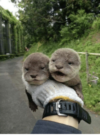 Adorable Baby otters. <3: 빌 Adorable Baby otters. <3