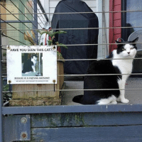Cats, Funny, and Cat: HAVE You SEEN THIS CAT?  BECAUSE HE IS Fre%INGAWESOME!