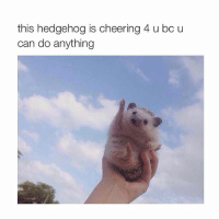 thank you: this hedgehog is cheering 4 u bc u  can do anything thank you