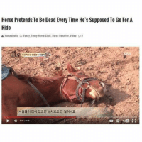 My hero 🐎🐎🐎: Horse Pretends To Be Dead Every Time He's Supposed To Go For A  Ride  & Horseaholic D funny. Funny Horse Stuff, Horse Behavior. Video p9  1:4513-15 My hero 🐎🐎🐎