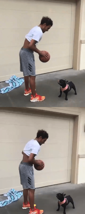 "😂 Trae Young told the dog ""CHECK UP"" then dropped the ball on its face!  Was expecting a dunk at the end since it was a low rim. https://t.co/6ZJehLqMta: 😂 Trae Young told the dog ""CHECK UP"" then dropped the ball on its face!  Was expecting a dunk at the end since it was a low rim. https://t.co/6ZJehLqMta"