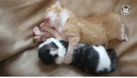 Enough politics. Here are some cute kittens.: 0-0  LECT  aco Enough politics. Here are some cute kittens.