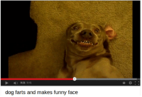 Funny, Dog, and Face: 0:21/0:41  0  dog farts and makes funny face