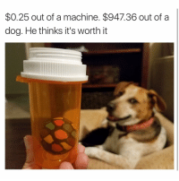 Dogs eat some crazy 💩: $0.25 out of a machine. $947.36 out of a  dog. He thinks it's worth it Dogs eat some crazy 💩