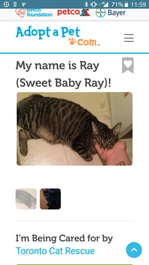 musclemancer:  musclemancer: Sweet baby ray I love you so much  sweet baby ray im crying i love you so fucking much : 0:4S 71%. 11:59  foundation petco  Bayer  BAYER  Adopt a Pet  &com  TM  My name is Ray  (Sweet Baby Ray)!  I'm Being Cared for by  oronto Cat Rescue musclemancer:  musclemancer: Sweet baby ray I love you so much  sweet baby ray im crying i love you so fucking much