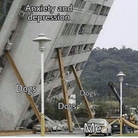 Dogs, Memes, and Depression: 0  Anxlety ana  depression  0  Dogs  Dogs  Dogs https://t.co/QG3Zyukui3