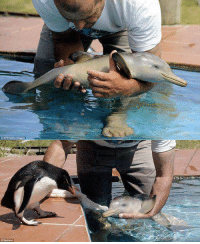 Baby dolphin meets baby penguin...☺: 0 APAOetty image Baby dolphin meets baby penguin...☺