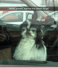 "Drugs, Fresh, and Funny: 0  ehhh, psssst, wanna buy some drugs"" Top 40 Fresh Super Funny Animal Pictures With Captions"