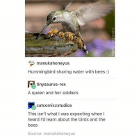 Instagram, Soldiers, and Tumblr: 0  manukahoneyus  Hummingbird sharing water with bees)  tinysaurus-rex  A queen and her soldiers  catcomixzstudios  This isn't what I was expecting when I  heard I'd learn about the birds and the  bees  Source: manukahoneyus I get distracted way too easily I have come onto instagram, no joke, like twenty times today with the intent of posting and I just got side tracked every time ~ Kay