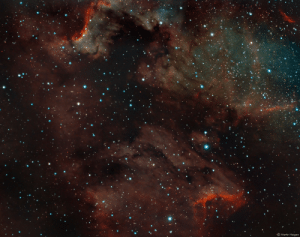 photos-of-space:  Cygnus Wall and Pelican Nebula in Narrowband: 0  Martin Heigan photos-of-space:  Cygnus Wall and Pelican Nebula in Narrowband