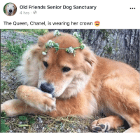 Friends, Queen, and Chanel: 0  Old Friends Senior Dog Sanctuary  4 hrs  The Queen, Chanel, is wearing her crown