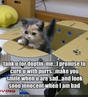 Bad, Smile, and Sad: 0  tankufordoptin me... promise to  cure u with purrs...make you  smile when u are sad...and loolk  So0O innocent when I am bad  VING  CANH AS CH E E ZE URGER.COM '争ミ