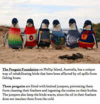 Bodies , The Penguin, and Australia: 0  The Penguin Foundation on Phillip Island, Australia, has a unique  way of rehabilitating birds that have been affected by oil spills from  fishing boats.  These penguins are fitted with knitted jumpers, preventing them  from cleaning their feathers and ingesting the toxins on their bodies.  The jumpers also keep the birds warm, since the oil in their feathers  does not insulate them from the cold. <p>Unique Way Of Rehabilitating Birds.</p>