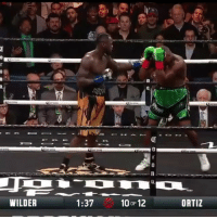The Bronze Bomber DeontayWilder remains undefeated at 40-0 after his TKO win against LuisOrtiz last night! 🥊🙌💯 @ShowtimeBoxing WSHH: 0  WILDER  1:37  ORTIZ  OF The Bronze Bomber DeontayWilder remains undefeated at 40-0 after his TKO win against LuisOrtiz last night! 🥊🙌💯 @ShowtimeBoxing WSHH