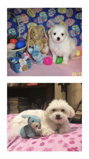 Dogs, Glo Up, and This: 03/1 this is my dogs glo up