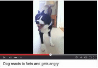 Dogs, Memes, and Angry: 0461129  Dog reacts to farts and gets angry