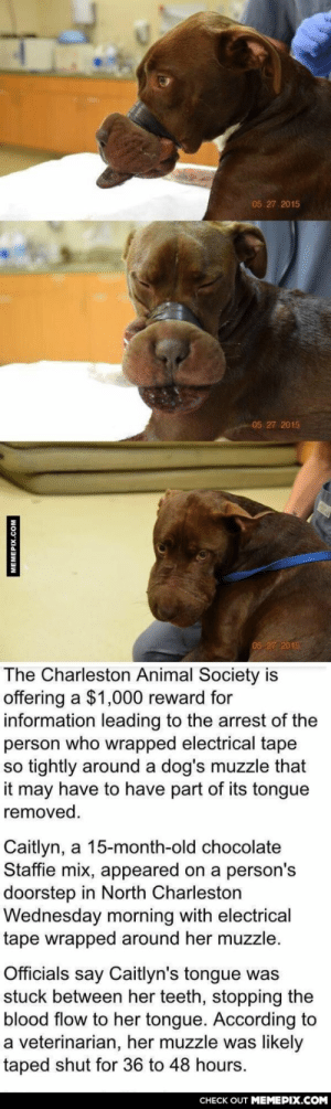 What's wrong with these kind of peopleomg-humor.tumblr.com: 05 27 2015  05 27 2015  05 27 2015  The Charleston Animal Society is  offering a $1,000 reward for  information leading to the arrest of the  person who wrapped electrical tape  so tightly around a dog's muzzle that  it may have to have part of its tongue  removed.  Caitlyn, a 15-month-old chocolate  Staffie mix, appeared on a person's  doorstep in North Charleston  Wednesday morning with electrical  tape wrapped around her muzzle.  Officials say Caitlyn's tongue was  stuck between her teeth, stopping the  blood flow to her tongue. According to  a veterinarian, her muzzle was likely  taped shut for 36 to 48 hours.  CHECK OUT MEMEPIX.COM  MEMEPIX.COM What's wrong with these kind of peopleomg-humor.tumblr.com
