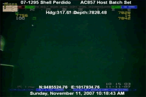 Anaconda, Creepy, and Fuck You: 07-1295 Shell Perdido AC857 Host Batch Set  Hdg:317.69 Depth:7828.487929  1385  6  100  7842  10-1S 03  N:9485524.76 E:1017934.7611-11-07  Sunday, November 11, 2007 10:18:43 ANM mani-skaldulfn: bopdawoo:  psshaw:  cultofkimber:  fencehopping:  Here you go: A giant squid with the creepiest fucking arms ever caught on video on an undersea oil rig. Here's the video  That isn't a giant squid; it's a bigfin squid! And that's actually way, way cooler!  Because! Bigfin Squid are really rarely seen past the juvenile stage. And, because we've never actually sampled an adult and they look radically different from the juvenile stage, we don't really have a definitive idea of what this thing even is. We only think it's an adult bigfin. And that's cool as hell 'cause it looks like an alien. But the juveniles look like this:  Look at its little tenta-nubbins! And I'd never seen a gif of the video or the video itself; I'd only seen this still of it:  So you just made my freakin' day.  God fuck you fuck you fuck awful no shit god bag every time I see creepy marine life I have to make sure I still have toes and I will not let them leave my sight for the next 45 minutes fuck you fuck.   isn't nature fun   the ocean is bullshit