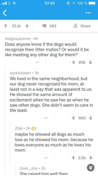 <p>Unexpected wholesome</p>: 07.45  33.1k  683  Share  indigosupreme 4h  Does anyone know if the dogs would  recognize their litter mates? Or would it be  like meeting any other dog for them?  896  socklobsterr 3h  We lived in the same neighborhood, but  our dog never recognized his mom, at  least not in a way that was apparent to us.  He showed the same amount of  excitement when he saw her as when he  saw other dogs. She didn't seem to care in  the least.  T 900  ZOdi 2h 1  maybe he showed all dogs as much  love as he showed his mom, because he  loves everyone as much as he loves his  mom  12.0k  Gold star 2h  She raised him well then <p>Unexpected wholesome</p>