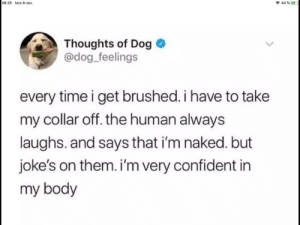 Jokes, Naked, and Time: 08:25 tors 8 nov.  44 % ED  Thoughts of Dog  @dog_feelings  every time i get brushed. i have to take  my collar off. the human always  laughs. and says that i'm naked. but  joke's on them. i'm very confident in  my body *doggos*