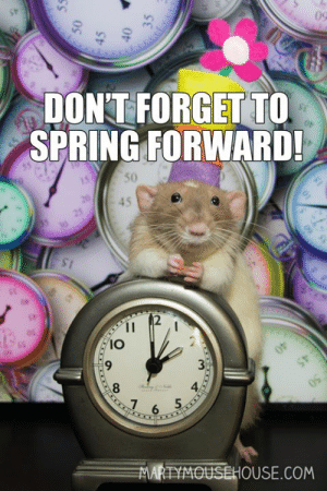 Memes, Spring, and 🤖: 09  DON'T FORGET TO  SPRING FORWARD!  50  2  IO  8  4  苎OUSEHOUSE.COM