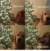 Funny, Hungry, and Girl Memes: 0What is it?  Can I eat it?  I'm gonna eat it. Hungry boi