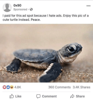 Cute, Turtle, and Peace: 0x90  Sponsored G  I paid for this ad spot because I hate ads. Enjoy this pic of a  cute turtle instead. Peace.  4.8K  360 Comments 3.4K Shares  Like  Comment  Share me_irl