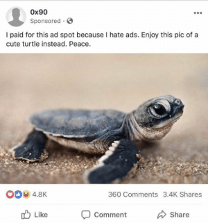 Cute, Facebook, and Memes: 0x90  Sponsored.  I paid for this ad spot because I hate ads. Enjoy this pic of a  cute turtle instead. Peace.  4.8K  360 Comments 3.4K Shares  Like  Comment  Share The hero Facebook deserves