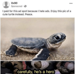 Club, Cute, and Tumblr: 0x90  Sponsored  I paid for this ad spot because I hate ads. Enjoy this pic of a  cute turtle instead. Peace.  carefully, he's a hero laughoutloud-club:  This guy