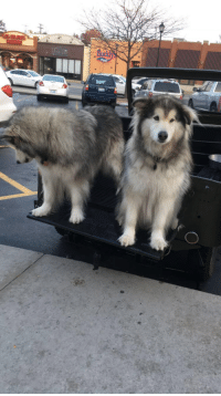This car has got some large woofers: 1上  弓扁 This car has got some large woofers