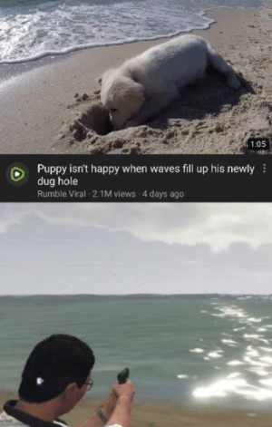 Waves: 1:05  Puppy isn't happy when waves fill up his newly  dug hole  Rumble Viral 2.1M views 4 days ago