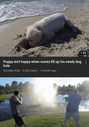 : 1:05  Puppy isn't happy when waves fill up his newly dug  hole  Rumble Viral 5.5M views 1 month ago