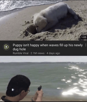 Meirl: 1:05  Puppy isn't happy when waves fill up his newly  dug hole  Rumble Viral 2.1M views 4 days ago Meirl