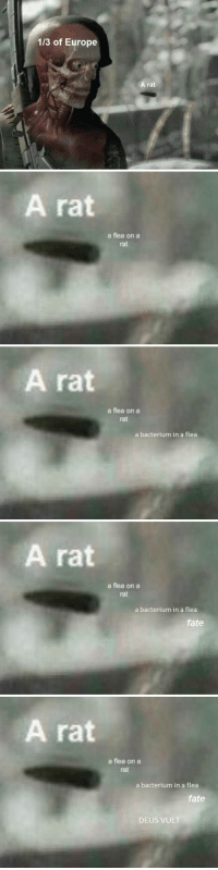 Europe, Fate, and Flea: 1/3 of Europe  A rat   A rat  a flea on a  rat   A rat  a flea on a  rat  a bacterium in a flea   A rat  a flea on a  rat  a bacterium in a flea  fate   A rat  a flea on aa  rat  a bacterium in a flea  fate  DEUS VUL Does this new Sniper Elite format have potential?