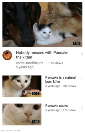 Born Killer, Source, and Kitten: 1:52  Nobody messes with Pancake  the kitten  camelsandfriends 1.1M views  5 years ago  Pancake is a natural  born killer  5 years ago 63K views  0:16  Pancake sucks  5 years ago 27K views'  1:08  Source: russiacore Pancake