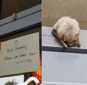 Wholesome, Bat, and Door: 1  Bat Skepi  Pase oe oter Door Now this is wholesome