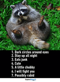 Memes, Raccoon, and 🤖: 1. Dark circles around eyes  2. Stay up all night  3. Eats junk  4. Cute  5. A little chubby  6. will fight you  7. Possibly rabid  Talent  Explore Signs you might be a raccoon: