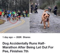 Dank, 🤖, and Dog: 1 day ago- 202K Shares  Dog Accidentally Runs Half-  Marathon After Being Let Out For  Pee, Finishes 7tlh