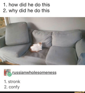 How, Why, and Did: 1. how did he do this  2. why did he do this  russianwholesomeness  1. stronk  2. confy  if unny.co