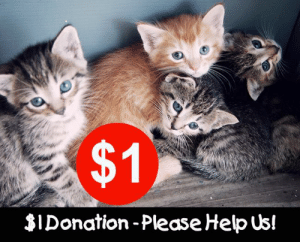 Calling all LIKERS & FRIENDS ... we are always operating on a shoestring and are all volunteers as we can't afford staff. If everyone made just a $1 donation we would have more than enough to pay for rescued kittens vet care, food, flea & worm treatments, litter, bedding, scratch poles & (most important) toys! Donations are tax deductible. Just click the Donate button on this page or visit www.wildcatsqld.com/donate.html: $1  $IDonation -Please Help Us! Calling all LIKERS & FRIENDS ... we are always operating on a shoestring and are all volunteers as we can't afford staff. If everyone made just a $1 donation we would have more than enough to pay for rescued kittens vet care, food, flea & worm treatments, litter, bedding, scratch poles & (most important) toys! Donations are tax deductible. Just click the Donate button on this page or visit www.wildcatsqld.com/donate.html